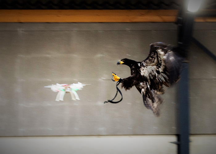 Dutch Police Drone Catching Eagle